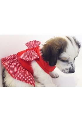 Dogi & Dog Kırmızı Puantiyeli Elbise