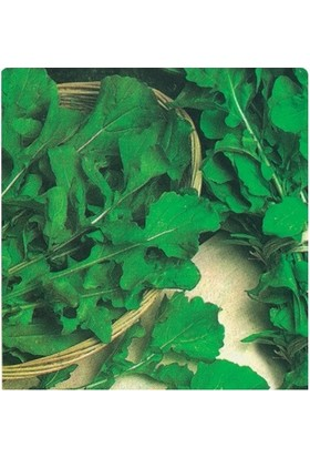 Tohum Diyarı Geniş Yapraklı Roka Tohumu 10+ Tohum