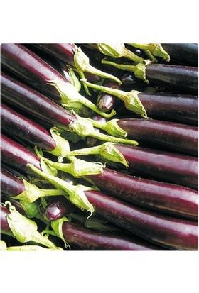 Tohum Diyarı Halep Karası Patlıcan Tohumu 10+ Tohum