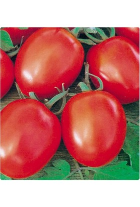 Tohum Diyarı İnce Yapraklı Maydanoz Tohumu 30+ Tohum