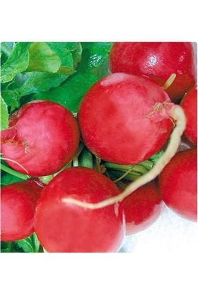Tohum Diyarı İri Kırmızı Turp Tohumu 30+ Tohum