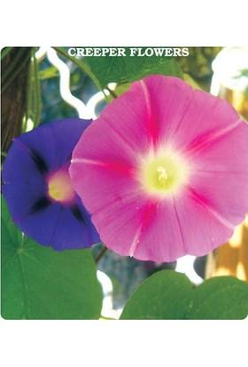 Tohum Diyarı Karışık Renkli Sarmaşık Çiçek Tohumu 10+ Tohum