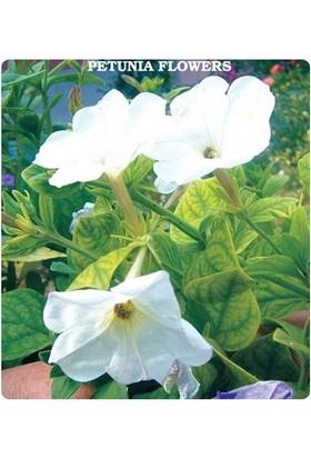 Tohum Diyarı Nadir Beyaz Petunya Çiçeği Tohumu 10+ Tohum