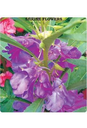 Tohum Diyarı Nadir Türbe Çiçeği Tohumu 10+ Tohum