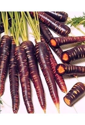 Tohum Diyarı Organik Mor Havuç Tohumu 10+ Tohum