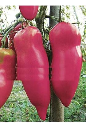 Tohum Diyarı Pembe Biber Görünümlü Domates Tohumu 10+ Tohum