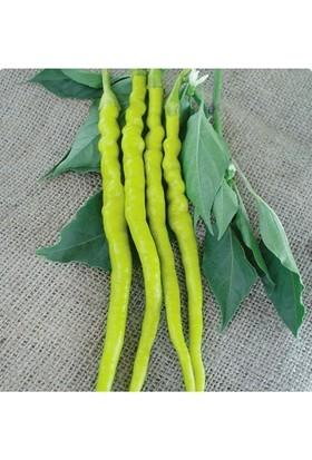 Tohum Diyarı Sarı Sivri (Tatlı) Biber Tohumu 10+ Tohum