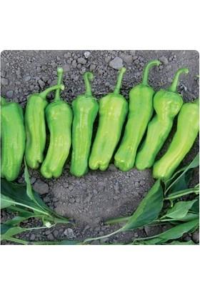 Tohum Diyarı Üç Ağız Köy Biberi Tohumu 10+ Tohum