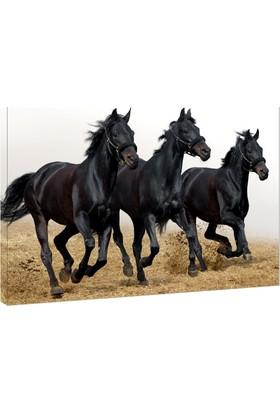 Siyah Atlar Kanvas Tablo - 50x70 cm