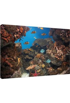 Akvaryum Fotoğrafı V2 Kanvas Tablo - 50x70 cm
