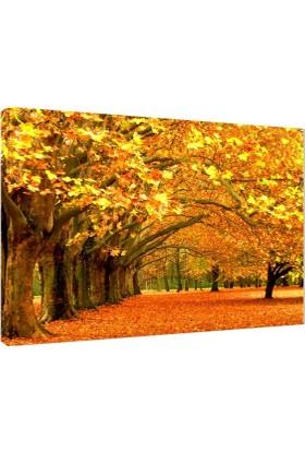 Son Bahar Fotoğrafı V1 Kanvas Tablo - 50x70 cm