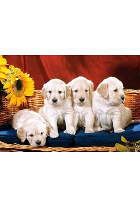 Castorland 1000 Parça Puppies With Sunflower