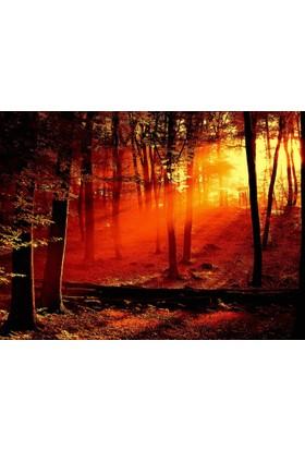 Orman Günbatımı 3 Boyutlu Duvar Kağıdı