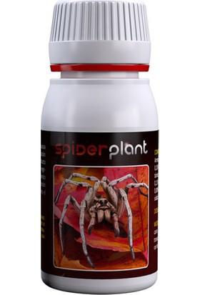 Spider Plant 60 ml
