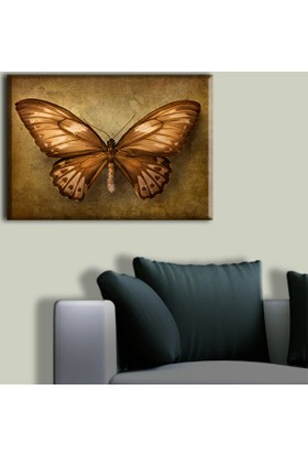 Tablo Art House Parşömen Üzerinde Kelebek Tek Parça Kanvas Tablo 30 x 40 cm