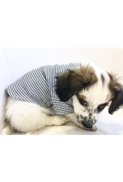 Dogi& Dog Pitikare Gömlek Köpek Kıyafeti