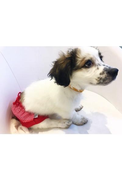 Dogi & Dog Kırmızı Puantiyeli Regli Kilotu Köpek Kiyafeti