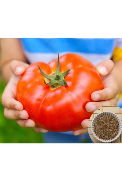 Tohum Diyarı Dev Kırmızı Domates Tohumu 10+ Tohum
