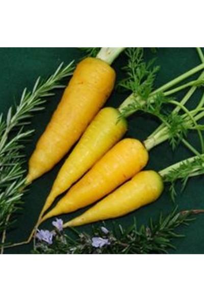 Tohum Diyarı Organik Sarı Havuç Tohumu 10+ Tohum