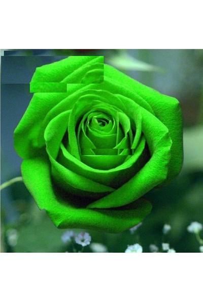 Tohum Diyarı Yeşil Gül Tohumu 5 Tohum