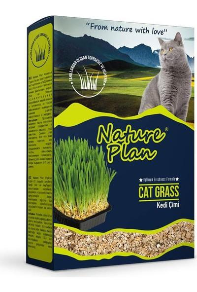 Nature Plan Premium Kedi Çimi