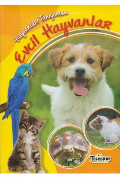 Evcil Hayvanlar - Cuberdon Books