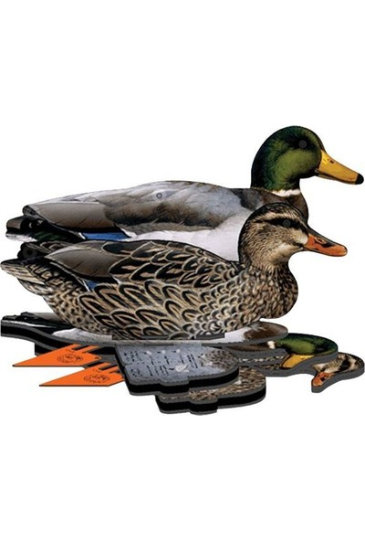Mühre Ördek - Mallard Ducks (3 Erkek-3 Dişi)