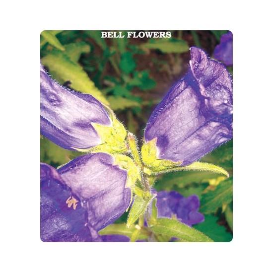 Tohum Diyarı Çan - Kadeh Çiçeği Tohumu 10+ Tohum