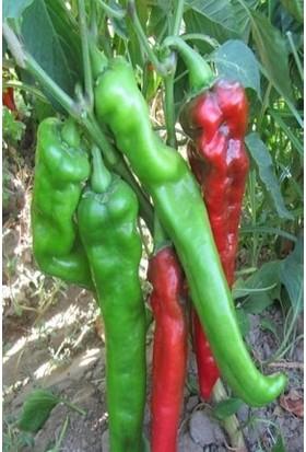 Agrobazaar 1000 Adet Yeşillik Tohumu 10 Çeşit Tohum Saksı 1 kg Şeker Gübresi
