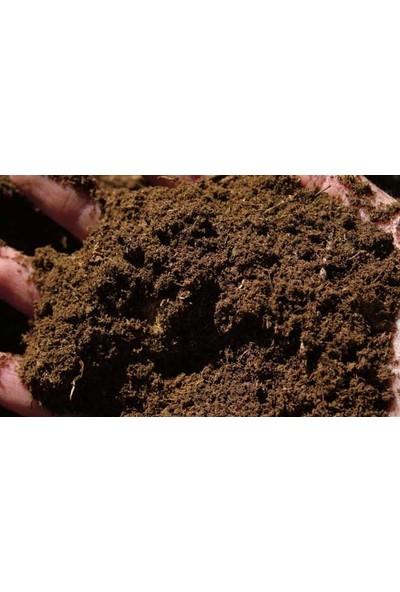 Agrobazaar Torf Toprağı Saksı Toprağı Çiçek Toprağı 10LT
