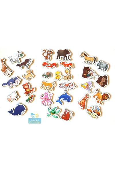 Hobialem Diytoy, Manyetik Hayvanlar, 30 Parça, Magnet Hayvan Figürleri, Mıknatıslı Hayvanlar