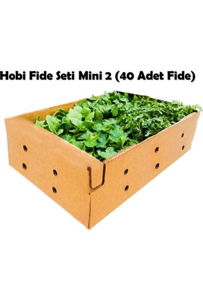 Fide Vadisi Hobi Fide Seti - Mini 2 (40 Adet Fide)