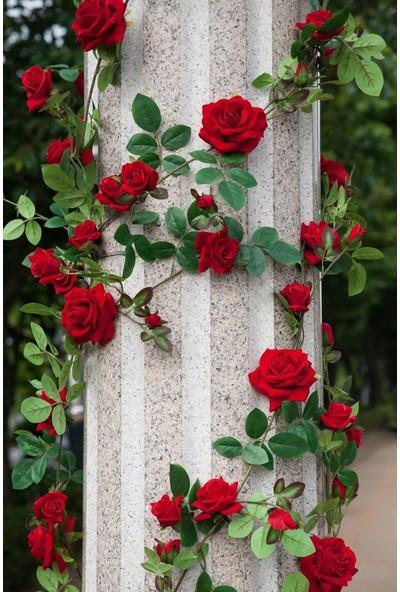 Moda Botanik Sarmaşık Gül Kırmızı Kokulu ,+150 cm