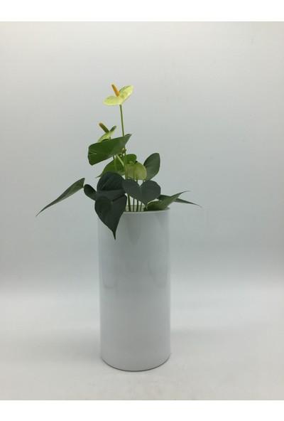 Afloday Beyaz 26 cm Silindir Cam Vazo