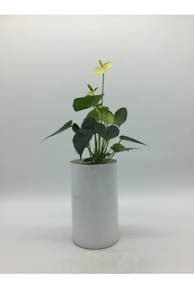 Afloday Beyaz 21 cm Silindir Cam Vazo
