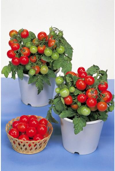Hb Botanic Bodur Cherry Domates Tohumu 5'li Tohum