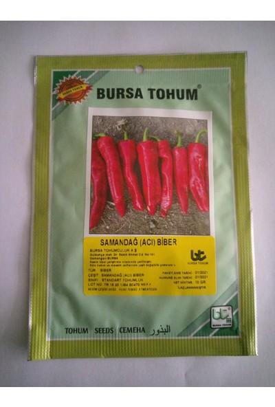Dörtbudak Bt Samandağı (Acı) Biber Tohumu 10 gr