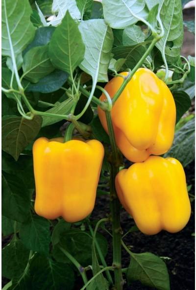 Hb Botanıc Sarı Dolmalık Biber Tohumu 10'lu Tohum