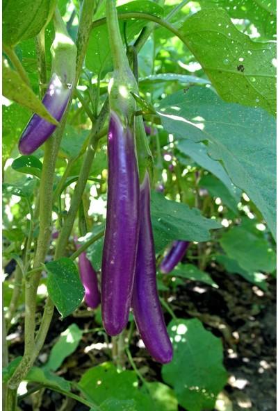 Hb Botanic Mor Tayland Patlıcan Tohumu 5'li Tohum