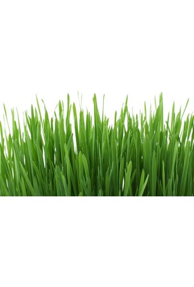 Ekobigsol %100 Organik Katı (Granül) Solucan Gübresi 3 kg