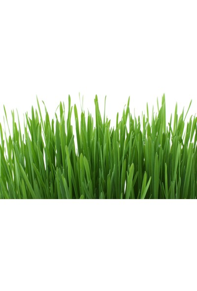 Ekobigsol %100 Organik Sıvı (Konsantre) Solucan Gübresi 5 Lt