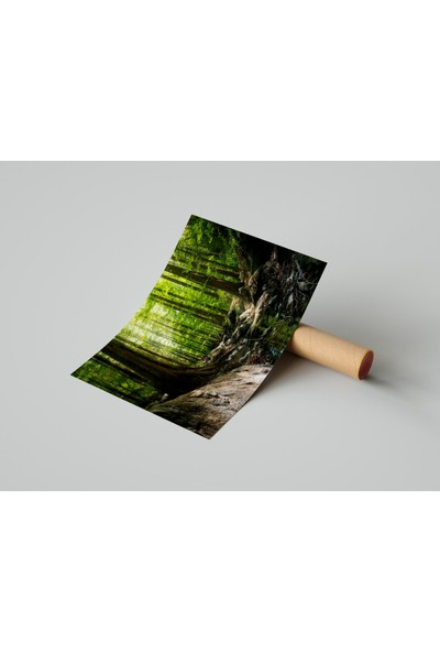 Termofom Doğa Kompozisyonlu Poster (35X50)