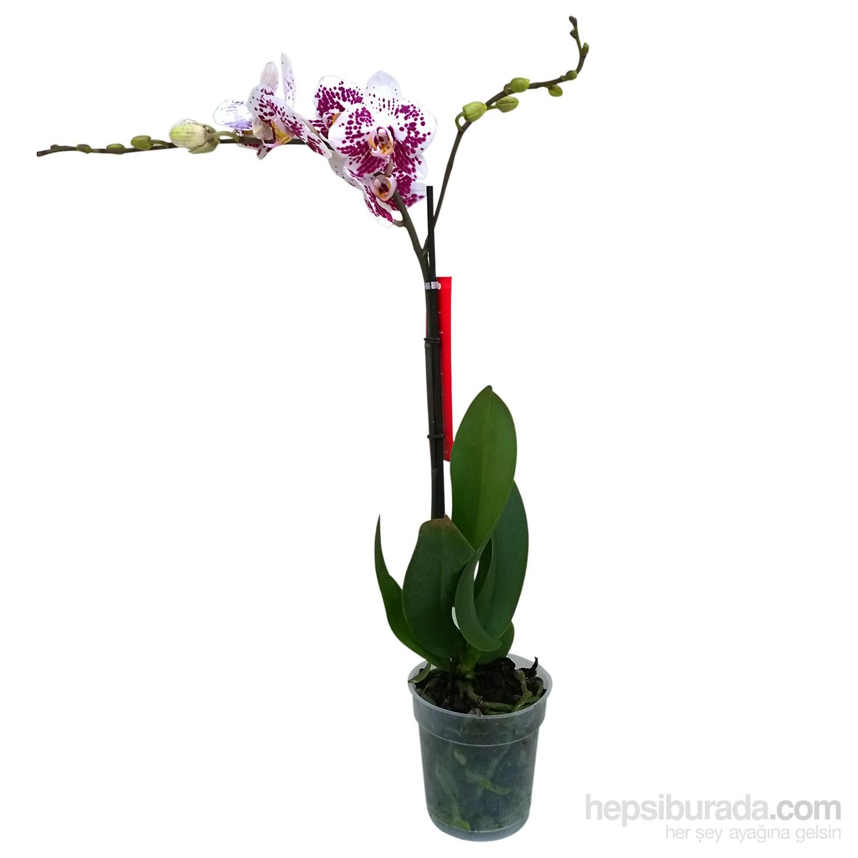 Saksıdaki orkide - bakımın temel kuralları