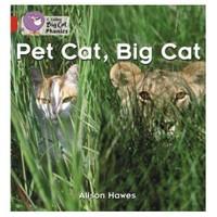 Pet Cat, Big Cat (Big Cat Phonics-2A Red)