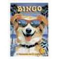 Bingo (Kahraman Köpek Bingo) ( DVD )