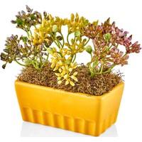 The Mia Fiorina Saksılı Çiçek Sarı