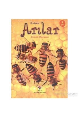 İlk Okuma Arılar - James Maclaine