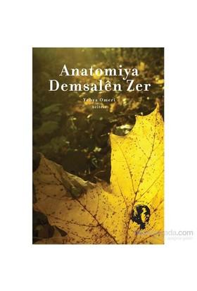 Anatomiya Demsalên Zer-Yehya Omeri