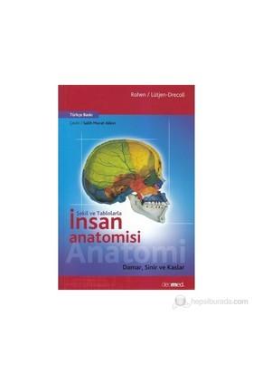 Şekil Ve Tablolarla İnsan Anatomisi