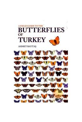 Butterflıes Of Turkey